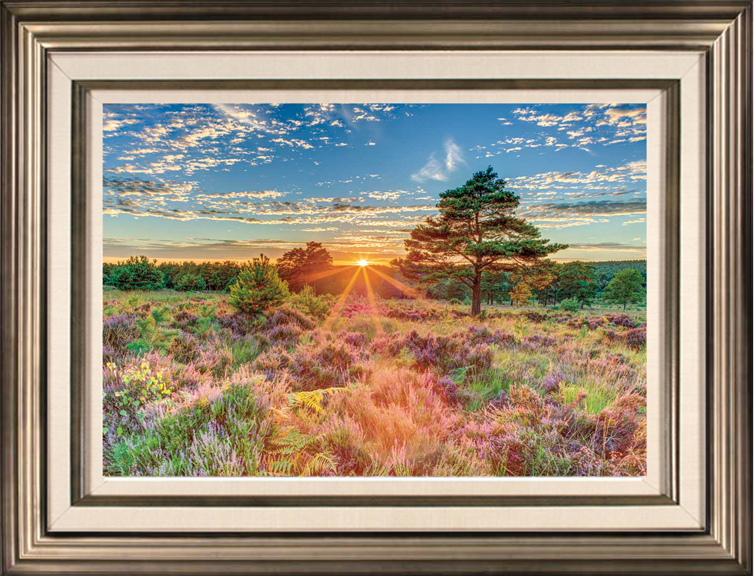Heathland Sunset