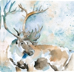 Caribou on Blue