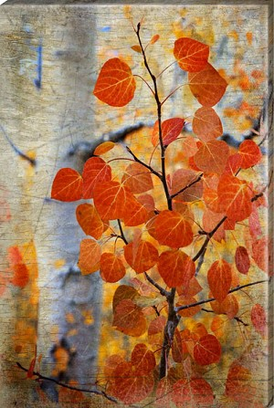 Aspen Fall Leaves